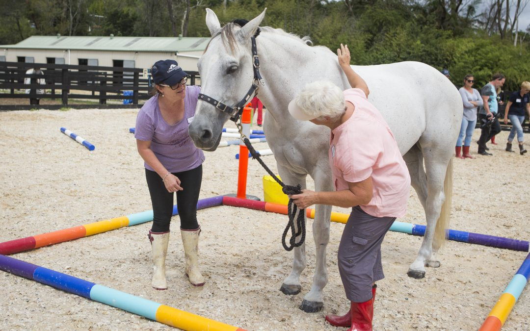 Horses teach about bias, presence and awareness